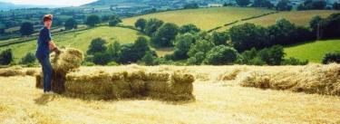Haymaking in June
